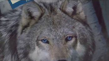 Blue Buffalo BLUE Wilderness  TV Spot, 'Wolf Dreams: Wild Rolls' - Thumbnail 4