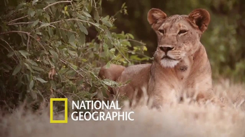 National Geographic TV Spot, 'TOMS: Big Cats Initiative' Feat. Kate Walsh - Thumbnail 3