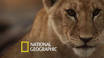 National Geographic TV Spot, 'TOMS: Big Cats Initiative' Feat. Kate Walsh - Thumbnail 4