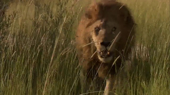 National Geographic TV Spot, 'TOMS: Big Cats Initiative' Feat. Kate Walsh - Thumbnail 7
