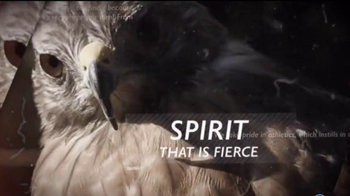 University of Louisiana - Monroe TV Spot, 'We Are the Warhawks' - 3 commercial airings