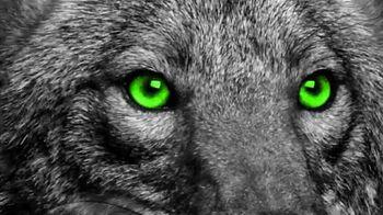 Coyote Logistics TV Spot, 'No Excuses'