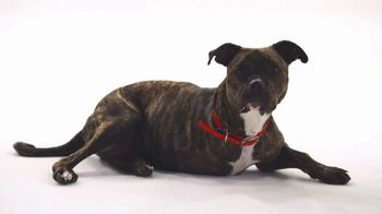 The Shelter Pet Project TV Spot, 'Maxie'