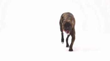 The Shelter Pet Project TV Spot, 'Maxie' - Thumbnail 2