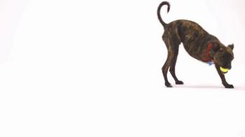 The Shelter Pet Project TV Spot, 'Maxie' - Thumbnail 4