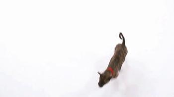 The Shelter Pet Project TV Spot, 'Maxie' - Thumbnail 5