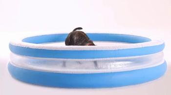 The Shelter Pet Project TV Spot, 'Maxie' - Thumbnail 6
