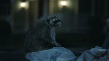 GEICO TV Spot, 'Raccoons, C'mon Try It!: It's What You Do' - Thumbnail 4