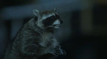 GEICO TV Spot, 'Raccoons, C'mon Try It!: It's What You Do' - Thumbnail 5