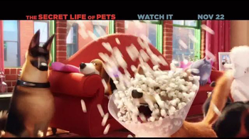 The Secret Life of Pets Home Entertainment TV Spot - Thumbnail 1