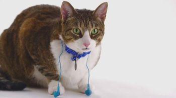 The Shelter Pet Project TV Spot, 'Meet Daisy'
