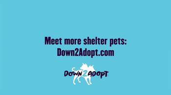 The Shelter Pet Project TV Spot, 'Meet Daisy' - Thumbnail 7