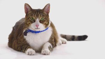 The Shelter Pet Project TV Spot, 'Meet Daisy' - Thumbnail 2