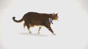 The Shelter Pet Project TV Spot, 'Meet Daisy' - Thumbnail 3
