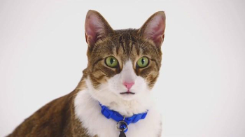 The Shelter Pet Project TV Spot, 'Meet Daisy' - Thumbnail 4