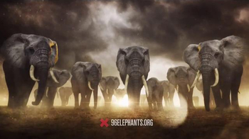 Wildlife Conservation Society TV Spot, '96Elephants.org' - 428 commercial airings