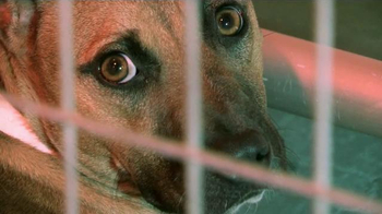 ASPCA TV Spot, 'Let the Healing Begin' Song by Josh Krajcik