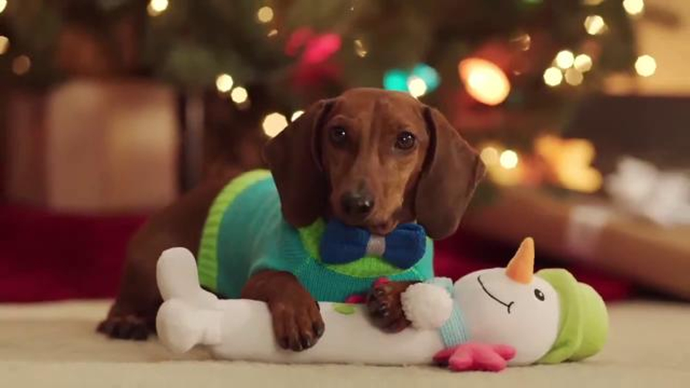 Petsmart Tv Commercial 2016 Holidays Dachshund