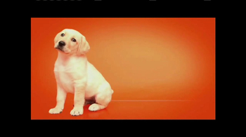 Southeastern Guide Dogs TV Spot, 'Meet Jackie and Gibson' - Thumbnail 3