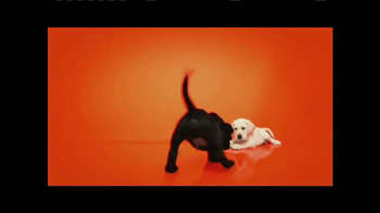 Southeastern Guide Dogs TV Spot, 'Meet Jackie and Gibson' - Thumbnail 4
