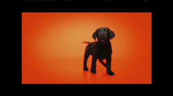 Southeastern Guide Dogs TV Spot, 'Meet Jackie and Gibson' - Thumbnail 5