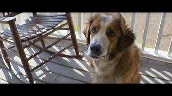 A Dog's Purpose - Thumbnail 7