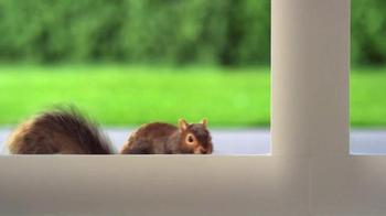 Purina Busy TV Spot, 'Mr. Squirrel' - Thumbnail 1
