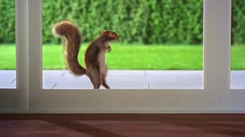 Purina Busy TV Spot, 'Mr. Squirrel' - Thumbnail 4