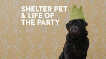 The Shelter Pet Project TV Spot, 'Shelter Pet Adoption'