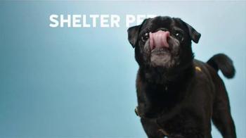 The Shelter Pet Project TV Spot, 'Shelter Pet Adoption' - Thumbnail 2