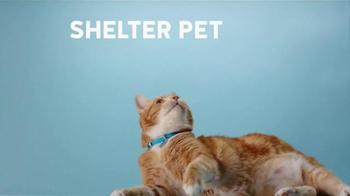 The Shelter Pet Project TV Spot, 'Shelter Pet Adoption' - Thumbnail 4