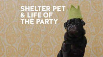 Shelter Pet Adoption thumbnail