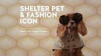 The Shelter Pet Project TV Spot, 'Shelter Pet Adoption' - Thumbnail 7