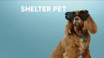 The Shelter Pet Project TV Spot, 'Toast Meets World' - Thumbnail 8