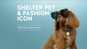The Shelter Pet Project TV Spot, 'Toast Meets World' - Thumbnail 9