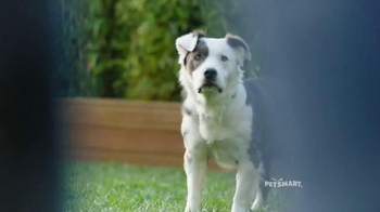 PetSmart TV Spot, 'A Happy Belly' Song by Queen - Thumbnail 4