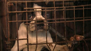 ASPCA TV Spot, 'No Escape' Featuring Lori Loughlin - Thumbnail 1