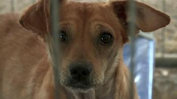 ASPCA TV Spot, 'No Escape' Featuring Lori Loughlin - Thumbnail 2