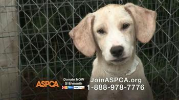 ASPCA TV Spot, 'No Escape' Featuring Lori Loughlin - Thumbnail 5