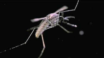 Microsoft Cloud TV Spot, 'Turning Insects Into Field Biologists' - Thumbnail 3