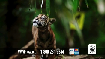 World Wildlife Fund TV Spot, 'Wild Tigers' - Thumbnail 8