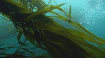 Conservation International TV Spot, 'Harrison Ford Is the Ocean' - Thumbnail 1
