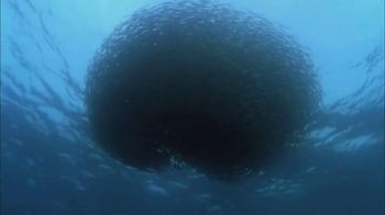 Conservation International TV Spot, 'Harrison Ford Is the Ocean'