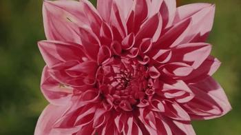 Conservation International TV Spot, 'Lupita Nyong'o is Flower' - Thumbnail 2