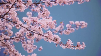 Conservation International TV Spot, 'Lupita Nyong'o is Flower' - Thumbnail 4
