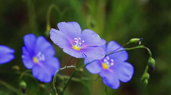 Conservation International TV Spot, 'Lupita Nyong'o is Flower'