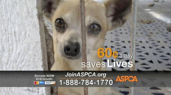 ASPCA TV Spot, 'Rescue Footage' Song by Steven Price - Thumbnail 4