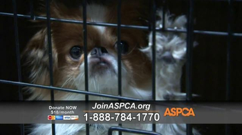 ASPCA TV Spot, 'Rescue Footage' Song by Steven Price - Thumbnail 5