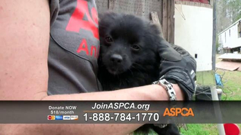 ASPCA TV Spot, 'Rescue Footage' Song by Steven Price - Thumbnail 7
