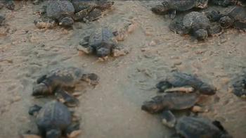 Oceana TV Spot, 'Save the Sea Turtles' Featuring Lauren Conrad - Thumbnail 2
